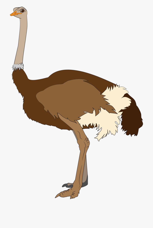 Ostrich Clipart Clip Art.