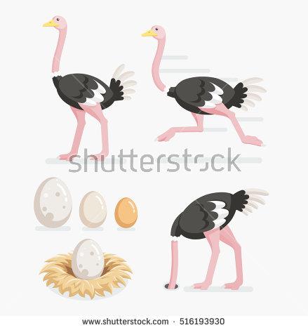 Ostrich Egg Stock Photos, Royalty.
