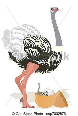 Ostrich egg Clipart Vector Graphics. 37 Ostrich egg EPS clip art.