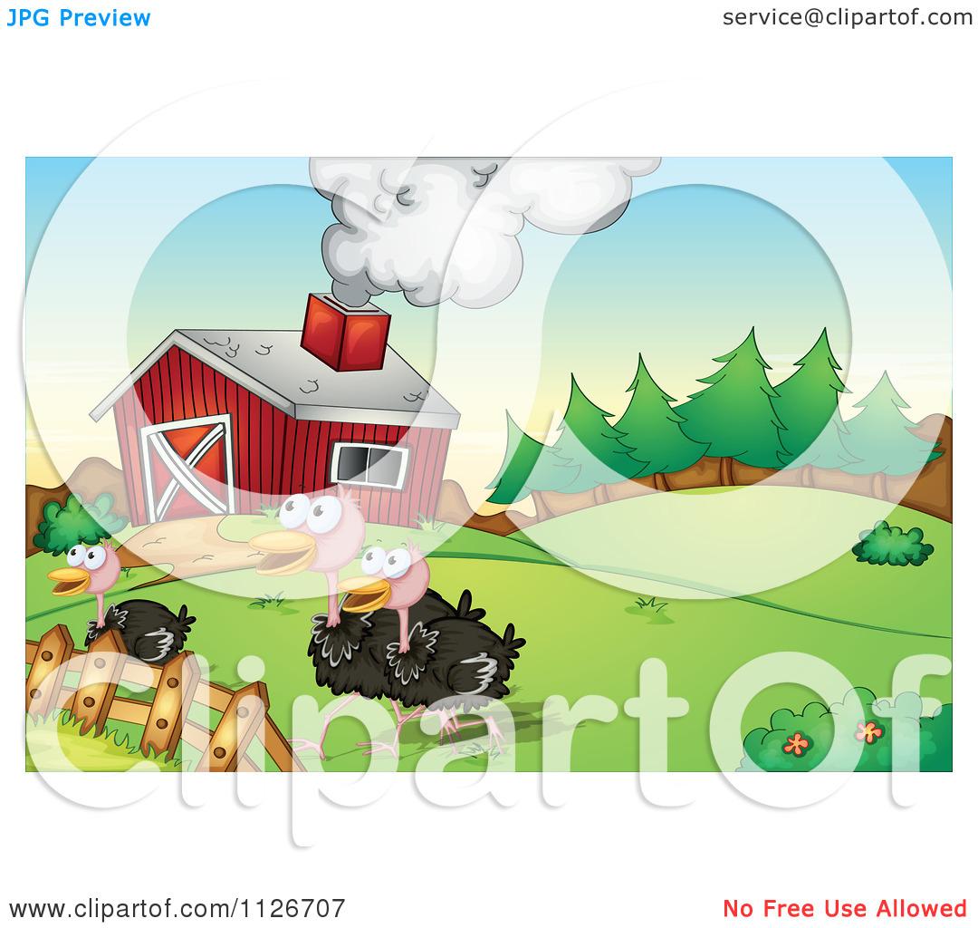 Cartoon Of Ostriches On A Farm.