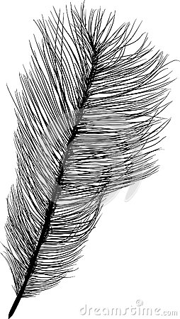 Download ostrich feathers clipart Common ostrich Feather.