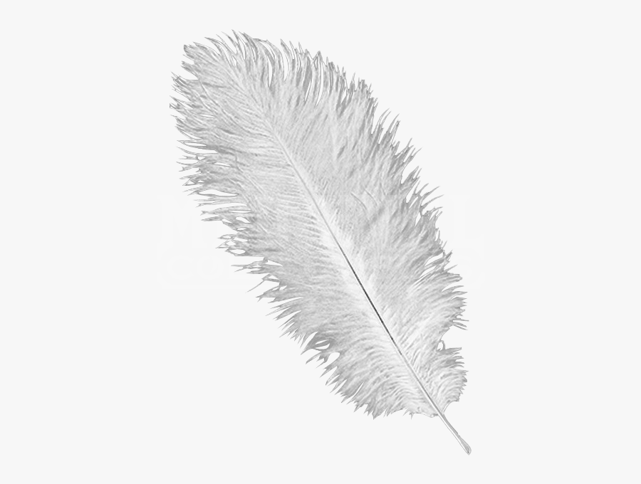 Ostrich Feathers Png.