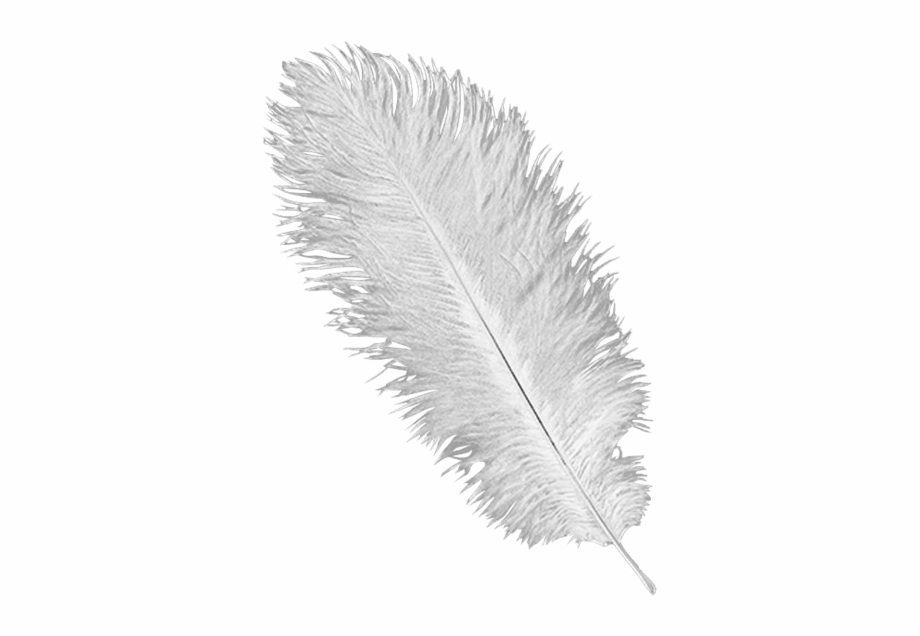 White Ostrich Feather Plume.