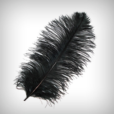 Download Free png Black Ostrich Feathers.