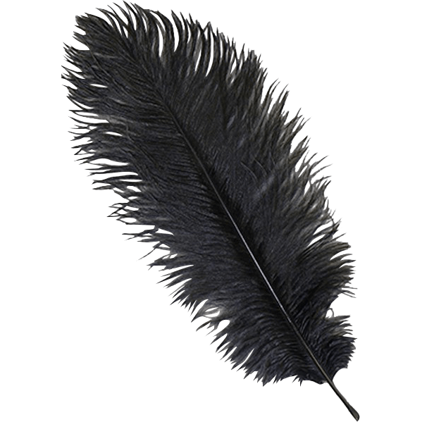 Black Ostrich Feather Plume.