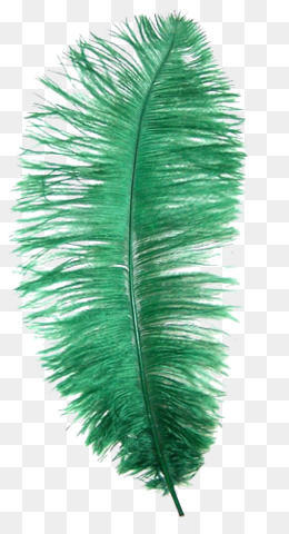 Ostrich Feather PNG.