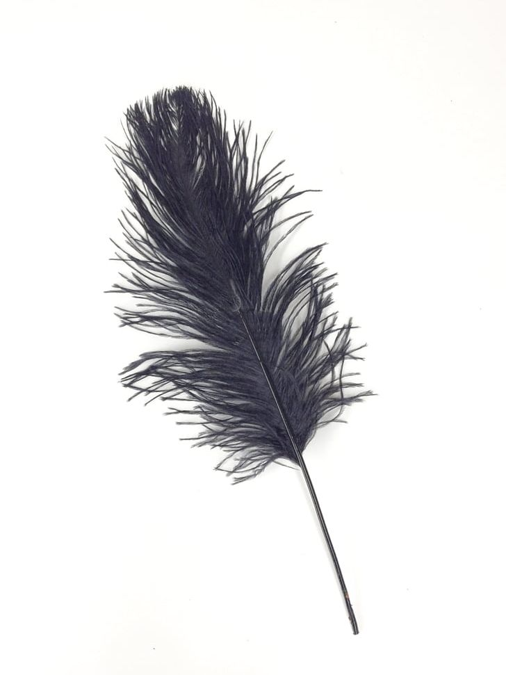 Common Ostrich Feather Wing PNG, Clipart, Animal, Animals.