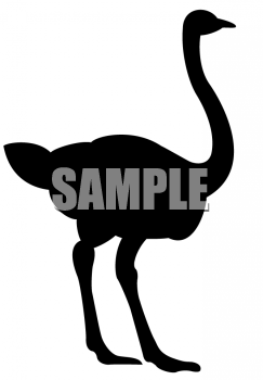 Silhouette of an Ostrich.