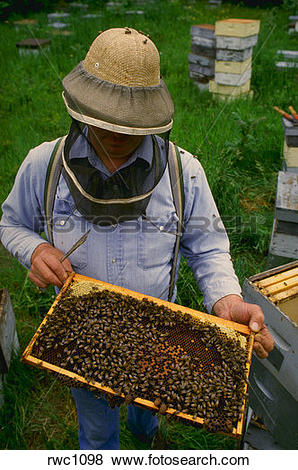 Pictures of Beekeeper with honey bee hive in Oswego County, New.