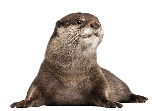 Download Free png Otter PNG Image.