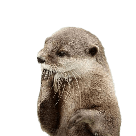Otter Fingers In Mouth transparent PNG.