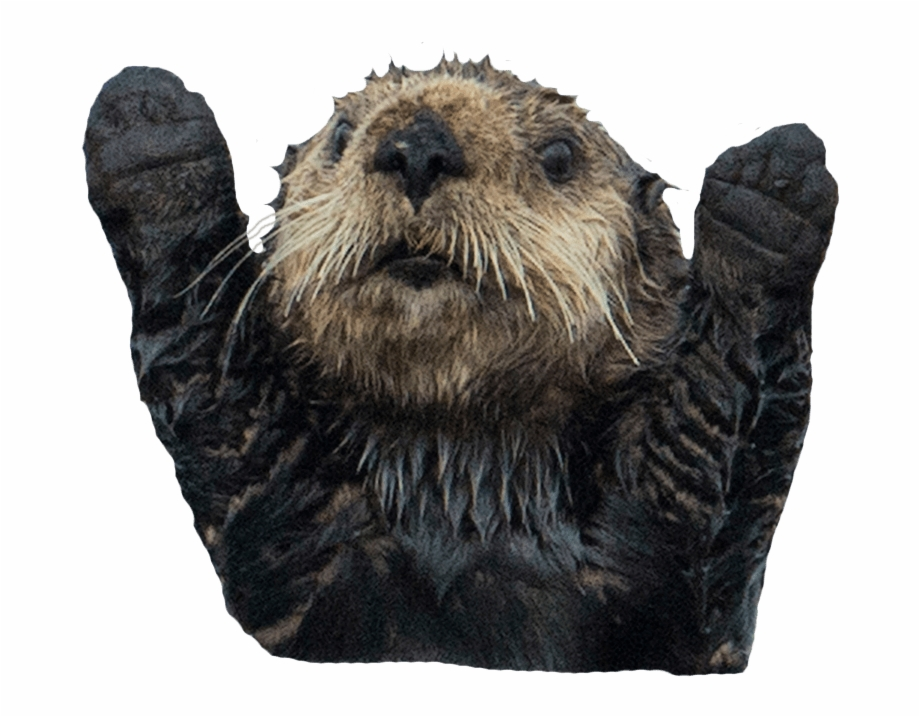 Sea Otter No Background Free PNG Images & Clipart Download.