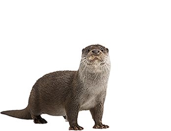 Otter Png (102+ images in Collection) Page 1.