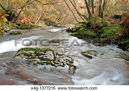 Stock Images of River Cerves Melon, Ourense, Galicia, Spain x4g.