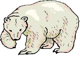 Clipart ours blanc.