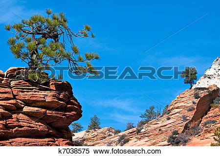Stock Image of Stunted tree on rocky outcrop k7038575.