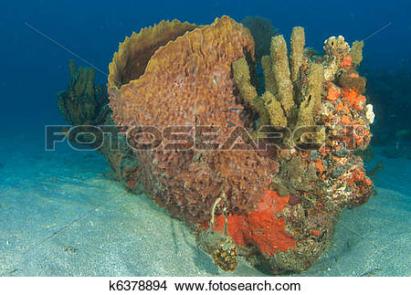 Stock Photo of Barrel Sponge and Organ Pipe Sponges on a small.