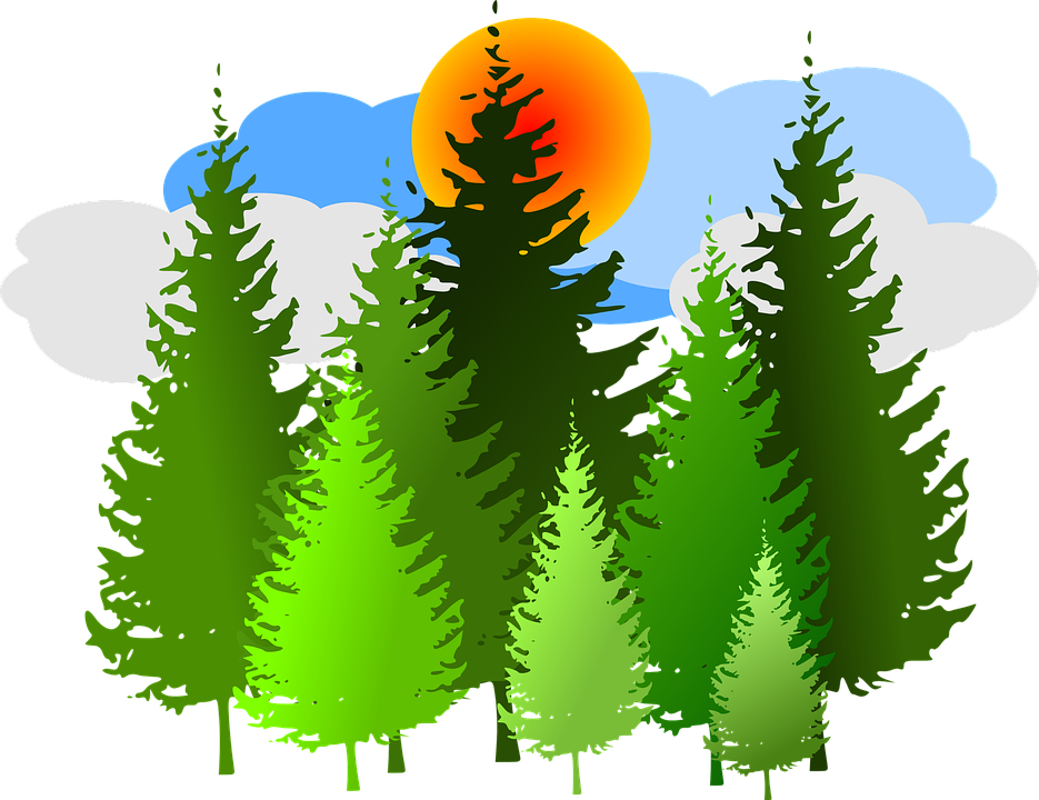 Free vector graphic: Spruce, Forest, Conifer, Sunrise.