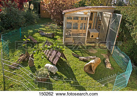 Stock Photo of rabbits in outdoor enclosure 150262.