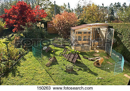 Stock Photo of rabbits in outdoor enclosure 150263.