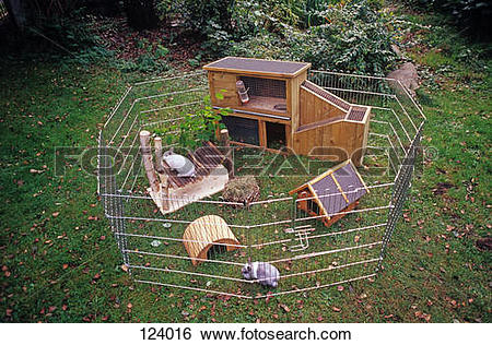 Stock Images of rabbits in outdoor enclosure 124016.