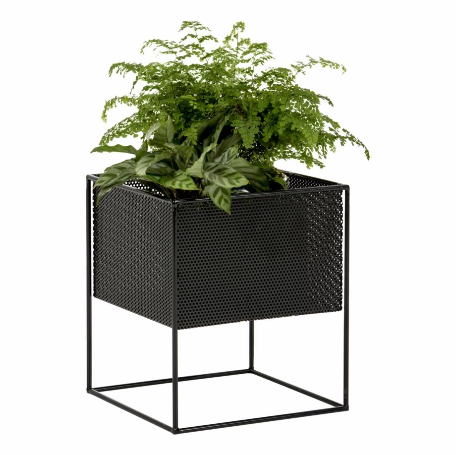 Outdoor Plants, Potted Plants, Indoor Outdoor, Outdoor.
