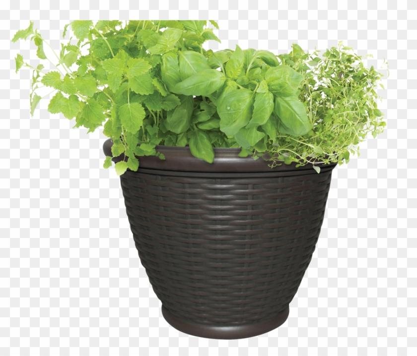 Potted Plants Clipart Transparent Background.
