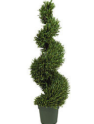 Outdoor plant png 1 » PNG Image.