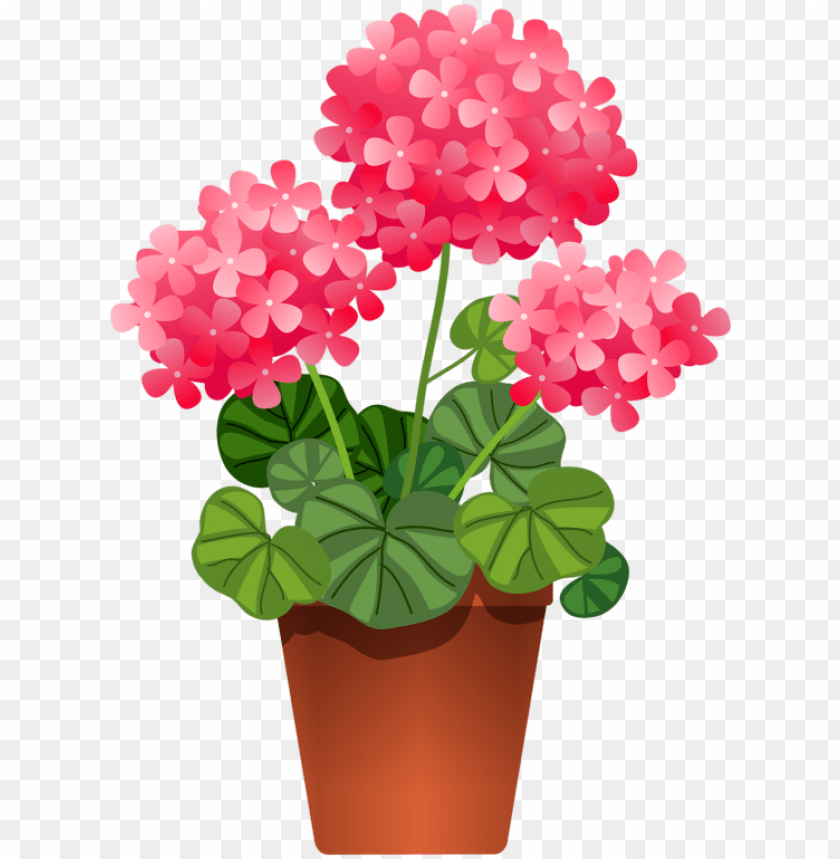 otted flowers flower clipart, flowers nature, potted.