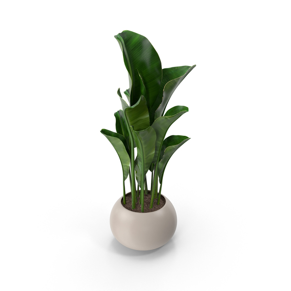 Flower Pot PNG Images & PSDs for Download.