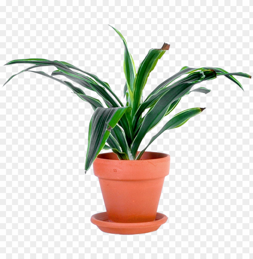 outdoor potted plants png.