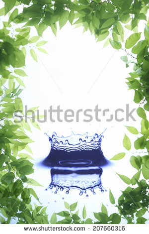 Outer leaves Stock Photos, Images, & Pictures.