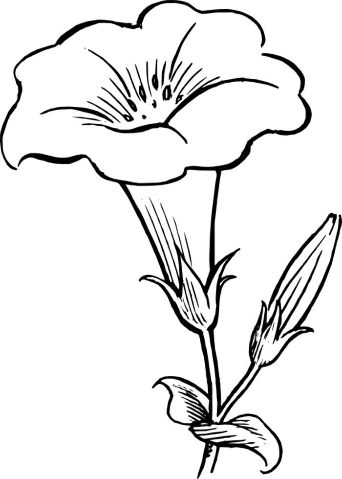 Outline Images Of Flowers.