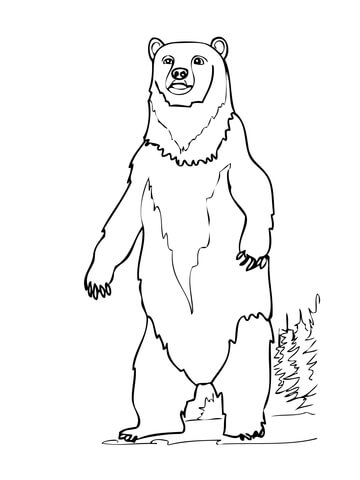 Brown Bear Standing up coloring page.