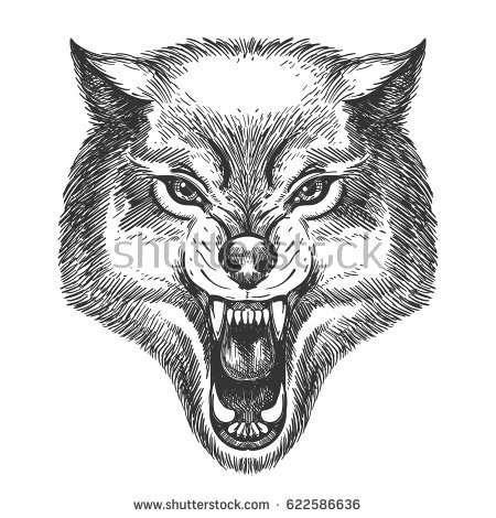 Engrave Raccoon Illustration Stock Vector 338096537.