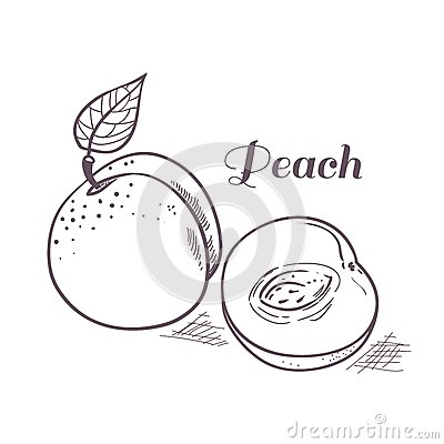 Outline Sketch Monochrome Peach. Stock Vector.