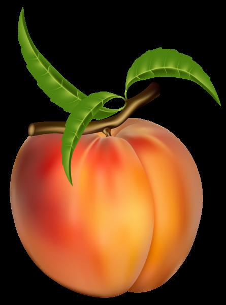 Peach clip art image #31413.