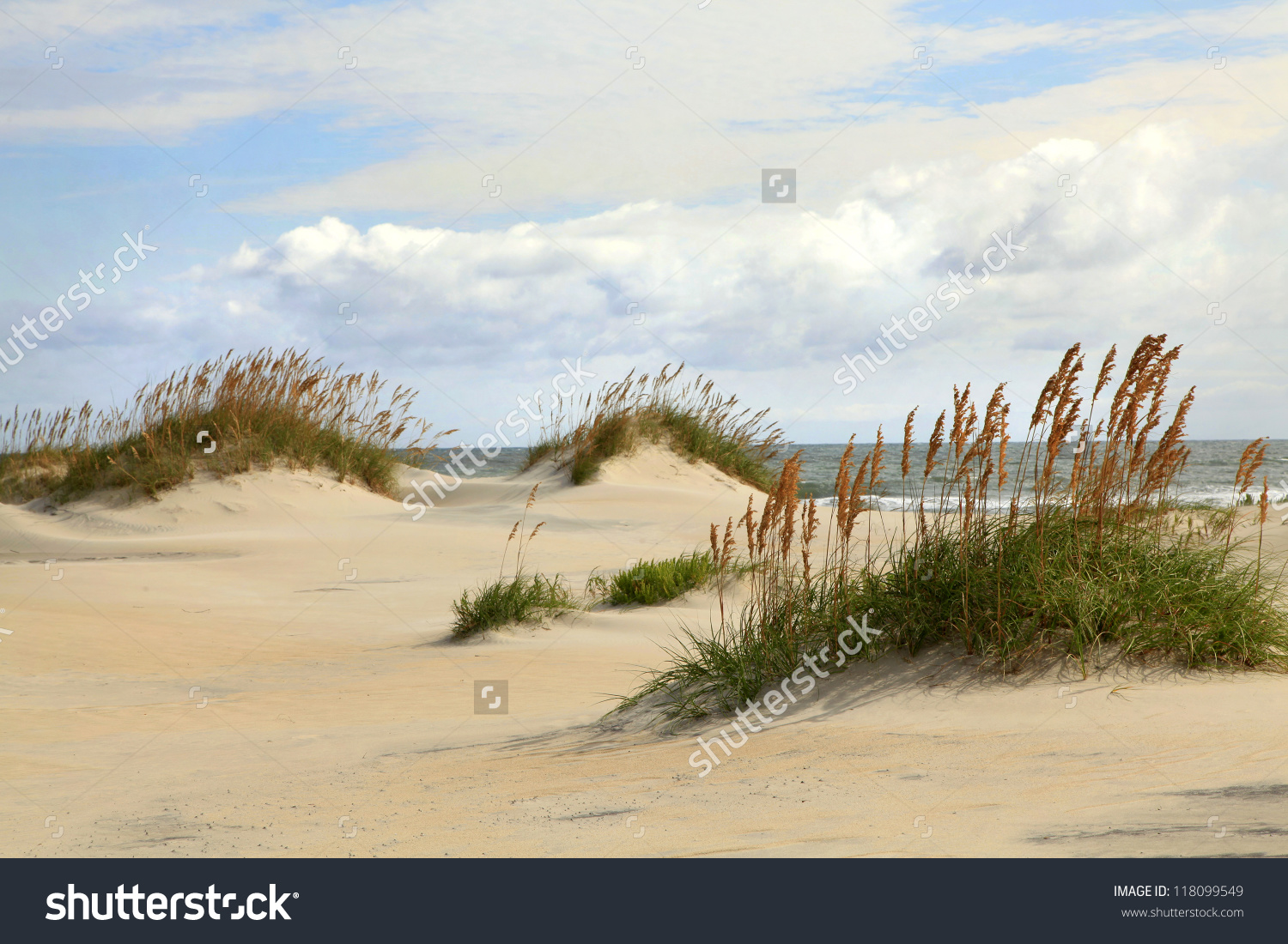 Sand Dunes On Outer Banks North Stock Photo 118099549.