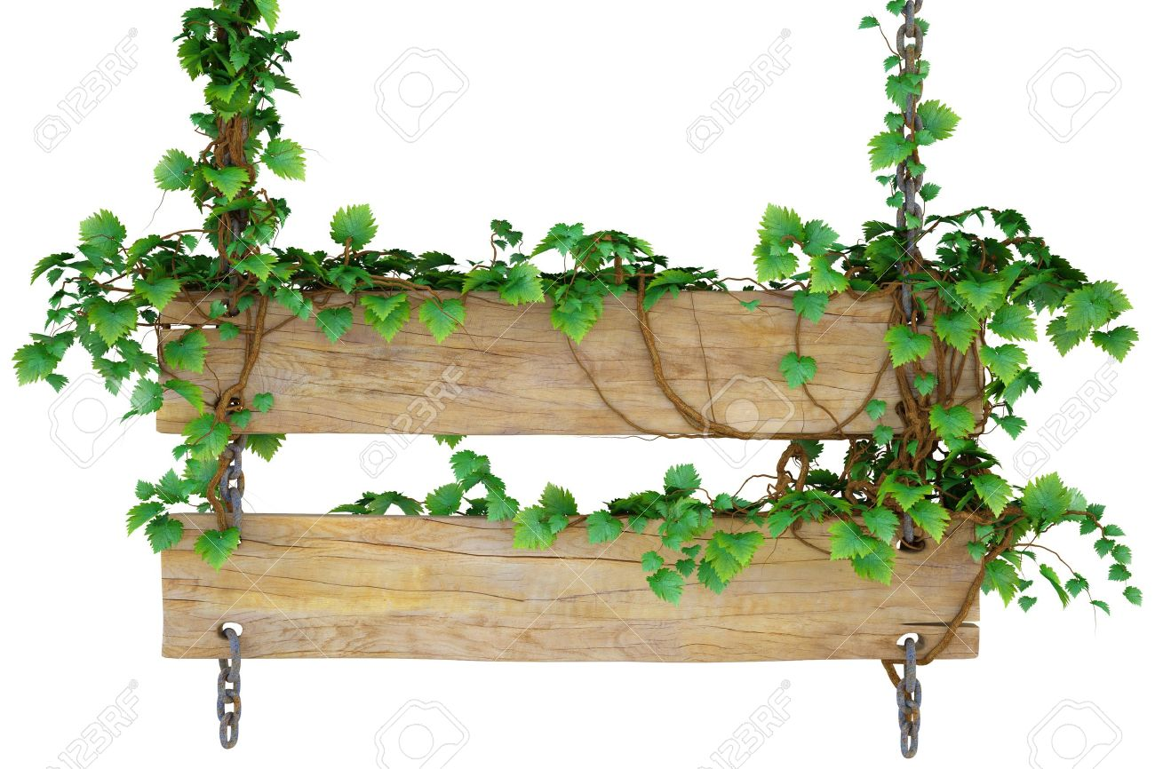 Wooden Sign Hanging On The Chains And Overgrown With Ivy. Isolated.