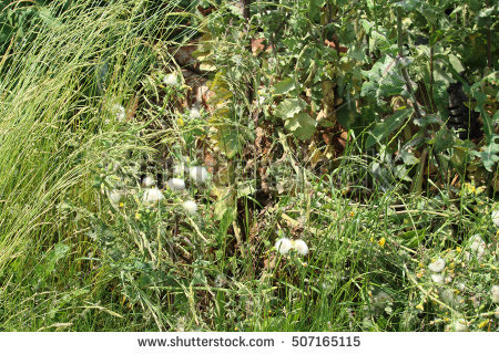 Overgrown grass side clipart.