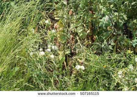 Overgrown grass side clipart.