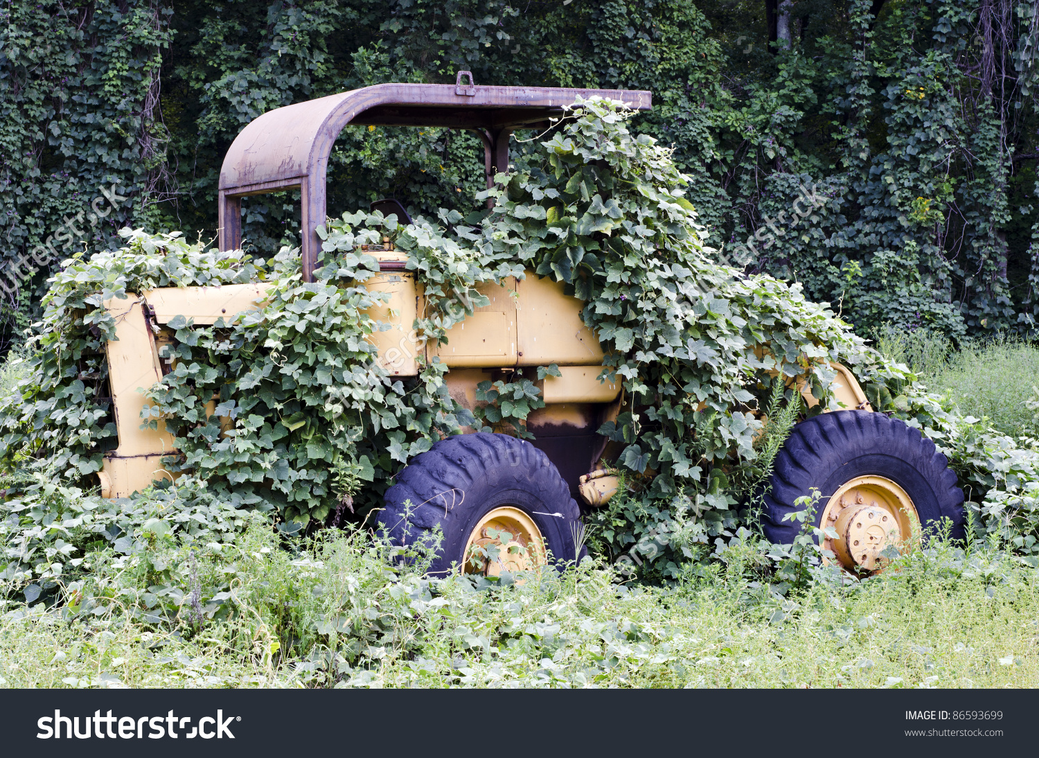 Bulldozer Overgrown With Kudzu Due To A Slow Construction Industry.