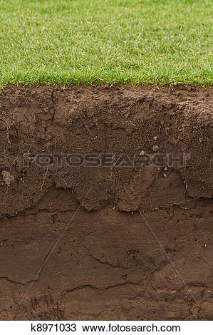 Stock Photo of Trimmed Grass over exposed soil k8971033.