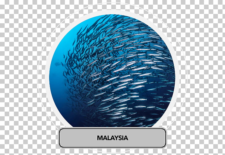 Fish stock Overfishing Fishery, fish PNG clipart.