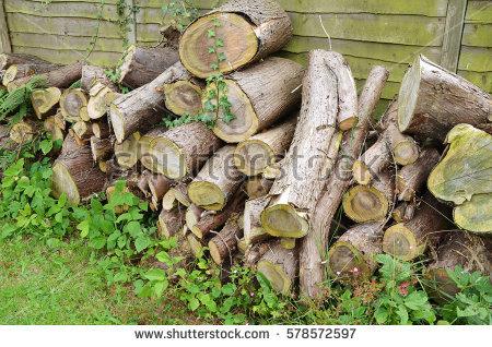 Overgrown Garden Stock Photos, Royalty.