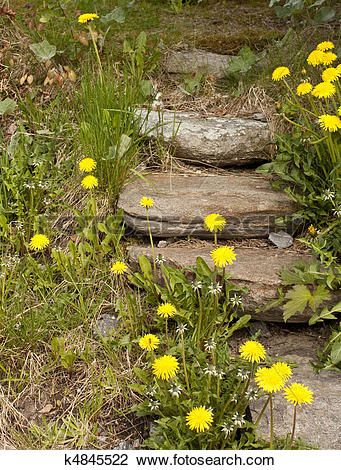 Stock Photo of Stepping stone stair overgrown with weeds and.