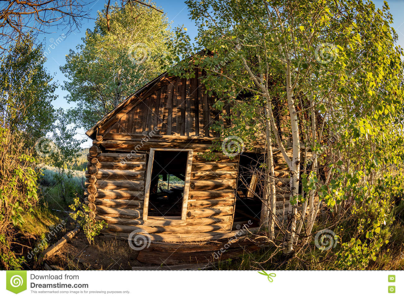 Log Cabin Overgrown With Too Many Trees Stock Photo.