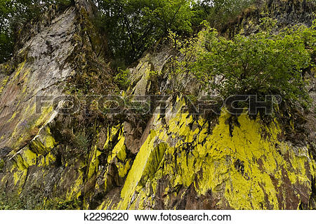 Stock Photography of Rockwall overgrown with moss k2296220.