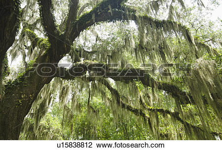 Stock Photo of Low angle view of tree overgrown with moss.