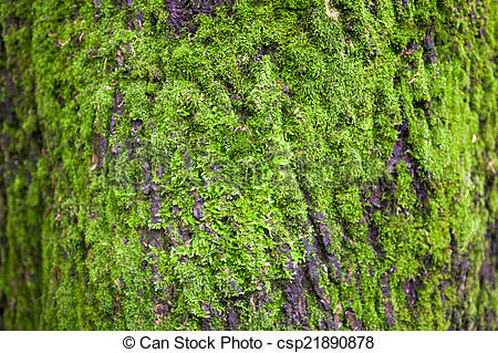Picture of Close up of the tree bark overgrown with moss.